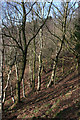 SJ5054 : Winter woodland on Raw Head by Espresso Addict