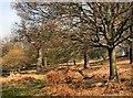 TQ1872 : Richmond Park by Paul Gillett