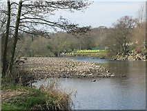 NY7063 : The River South Tyne between Alston Arches Viaduct and Tyne Bridge (2) by Mike Quinn