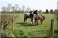 SJ6347 : Horses in paddock by Mickley Hall by Espresso Addict
