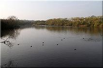 TQ2187 : Brent Reservoir by Martin Addison