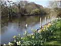 SU9179 : River Thames by Dorney by Colin Smith