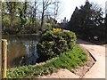 SS9115 : The pond at Loxbeare Barton farm by David Smith