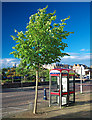 J5081 : Telephone boxes, Bangor by Rossographer