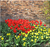 SE7170 : Tulip display by the old brick wall by Pauline E