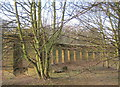 NZ2892 : Ruin of colonnade in Hall Wood at Cresswell by peter robinson