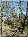 TQ2275 : Barnes Common (4) by Stephen Richards