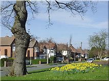 SO9096 : Springtime in Buckingham Road, Penn, Wolverhampton by Roger  Kidd