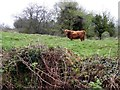 H4180 : Highland bull, Gortinagin by Kenneth  Allen