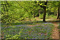 SP0974 : Early Bluebells - Fallings Coppice, Earlswood by John Davies