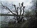 SK3899 : Along side Elsecar reservoir by Steve  Fareham