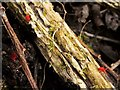 NS4573 : Velvet Mites by Lairich Rig
