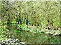SP1106 : View across the River Coln towards Ladyhill Covert, Bibury, Gloucestershire by Brian Robert Marshall