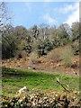 SX7574 : Field Below Mountsland Common by Tony Atkin