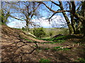 ST9101 : Spetisbury Rings, ditch by Mike Faherty