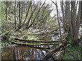 SK3189 : Fallen saplings, head of mill pond, Wisewood by Robin Stott
