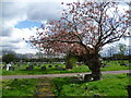TQ2772 : Meeting of paths in Streatham Cemetery by Marathon
