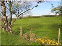 H5559 : Garvaghy Townland by Kenneth  Allen