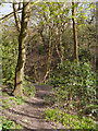 SD8103 : Path Through Prestwich Clough by David Dixon