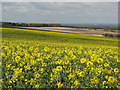 TL5246 : Across South Cambridgeshire by John Sutton