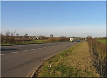 SK6514 : Road side of hedge by Andrew Tatlow