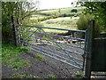 NZ1755 : Rough pasture west of Clough Dene by Christine Johnstone