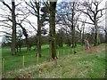 NZ1649 : Trees alongside Tower Road by Christine Johnstone