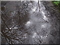 SD7315 : Reflections in a puddle by Philip Platt