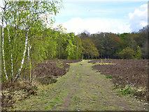 TQ2373 : On Putney Heath by Robin Webster