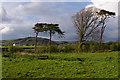 SD2977 : Grazing land near Ulverston by Ian Taylor