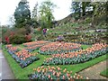 SJ8383 : Tulips in the lower garden, Quarry Bank by Christine Johnstone