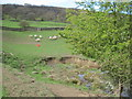 SE6695 : A  Spring  emerges  in  a  Farndale  field by Martin Dawes