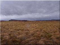 NN4060 : Rough grassland near Lub an Ime on Rannoch Moor by ian shiell