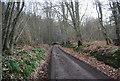 TQ6126 : Track, Hawksden Park Wood by N Chadwick
