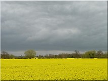SK1515 : Yellow field, grey sky, Orgreave in April by Christine Johnstone