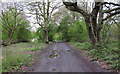 TQ4792 : Path along forest boundary by Roger Jones