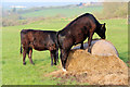 ST8426 : Bullocks, Coppleridge, Dorset by Christine Matthews