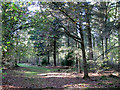 SP1464 : Central area, north of the summit, May's Wood by Robin Stott