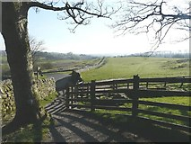 NY6166 : Looking east from the entrance to Birdoswald Roman fort by John Baker