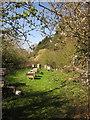 SE3161 : Beehives near Brearton Gate by Derek Harper
