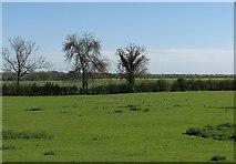 TL3852 : View from Harlton churchyard by John Sutton