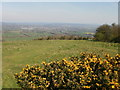 SU7120 : Yellow gorse on Butser Hill by Peter S