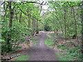 SJ5583 : Footpath through Big Wood by Sue Adair