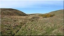 NR7204 : Wetland, Sanda by Richard Webb