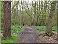 TM1931 : Path in Stour Wood by Roger Jones