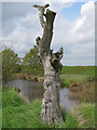 TM1631 : Dead tree near borrow dyke by Roger Jones