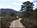 NO1795 : Woodland remnants by the Bealach Dearg track by Alan O'Dowd