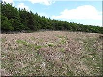 J3431 : Last years bracken on dry site above the Tullybranigan River Bog by Eric Jones