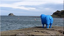 NR7204 : Blue sheep, Sanda by Richard Webb
