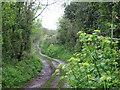 SX9068 : Downway Lane by Robin Stott